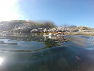 A swimmer in Lofoten