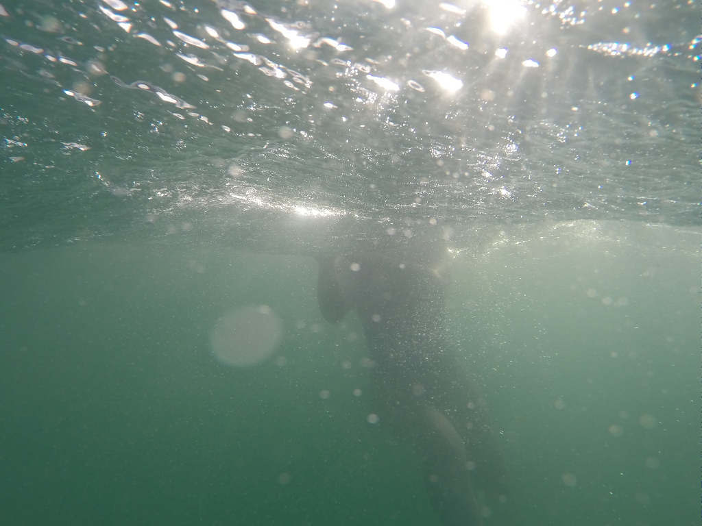 Light underwater - winter swimming