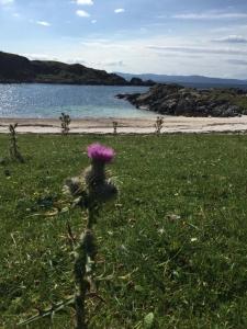 Beach at Rhu - swimQuest Swimming Holidays Scotland