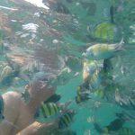 JCR SwimQuest Thailand
