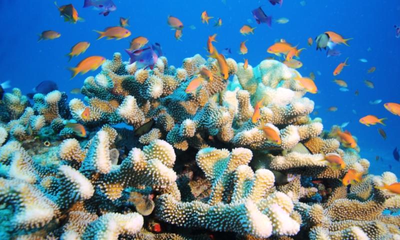 Coral near Paradise Taveuni