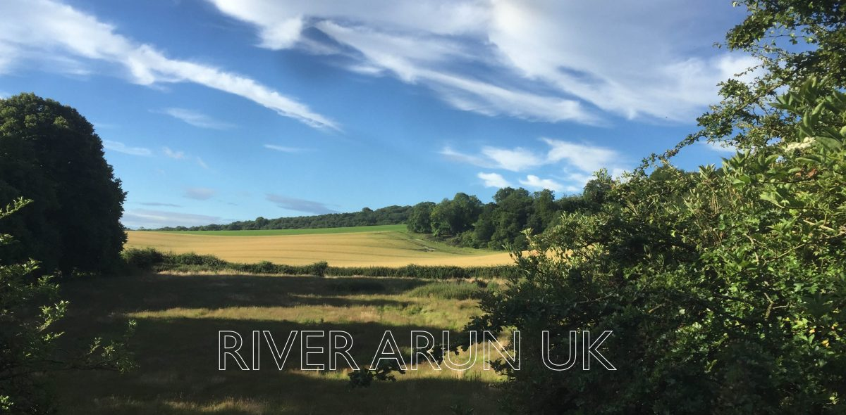 Swim the River Arun
