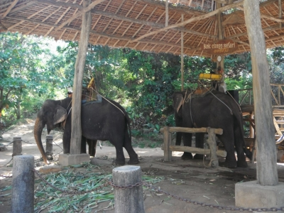 Elephants on Phuket