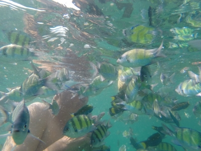 Fish in Thailand
