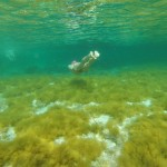 SwimQuest Formentera Swimmer