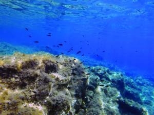 Mathraki Island, Greece, SwimQuest