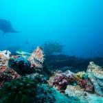 SwimQuest Maldives, image courtesy of Emperor Maldives