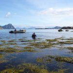 Swim Lofoten
