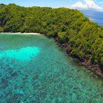 Apo-island-reef