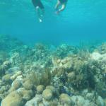 Reef swim