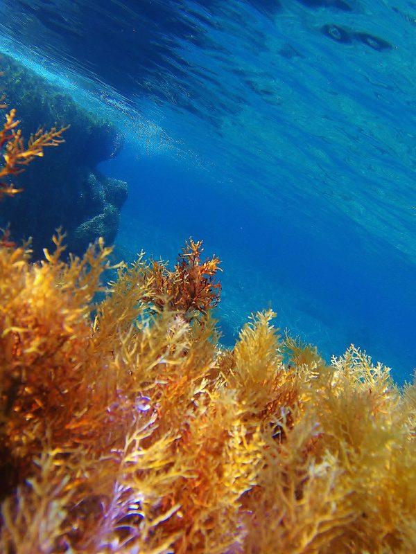 Mathraki Underwater